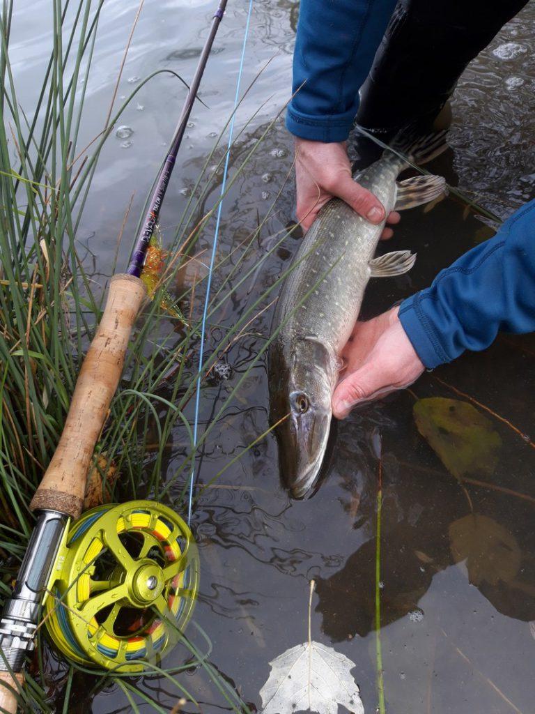 Guide pêche mouche carnassier